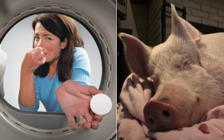 Как удалить запах из стиральной машинки