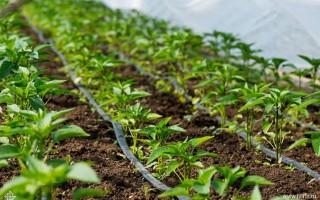 Поливные системы для огорода